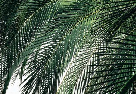 Palm Sunday: Lent 6